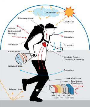 human thermal sensation and comfort environment.png